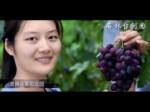 云南石林台创园宣传片