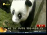 """熊猫""""巴斯""""37岁高寿  现存最长寿圈养大熊猫"""